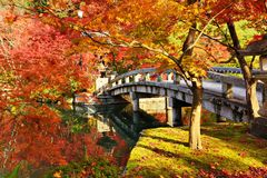 Herbstlaub in Kyoto Stockbilder