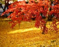 Herbstlaub in Kyoto Stockfotografie