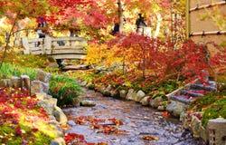 Herbstlaub in Kyoto Stockfoto