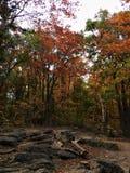 Herbstlaub-Linie Rocky Hiking Trail stockfotografie