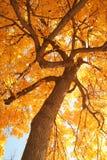 Herbstlaub mit Baumasten in der aufwärts Ansicht Stockfotografie