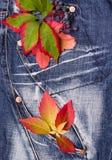 Herbstlaub mit Trauben Stockfotos