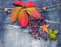 Herbstlaub mit Trauben auf einem Denimhintergrund Lizenzfreie Stockfotos