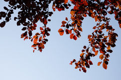 Herbstlaub nahe bei Fall Hintergrund Lizenzfreies Stockfoto