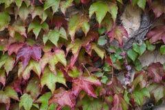 Herbstlaub, natürlicher Hintergrund stockfotografie
