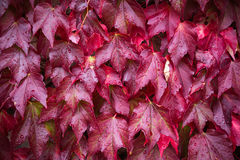 Herbstlaub, natürlicher Hintergrund lizenzfreie stockfotos