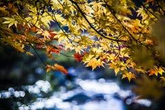 Herbstlaub neben dem Wasser lizenzfreies stockbild