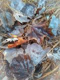 Herbstlaub pulverisiert mit dem ersten Schnee stockfotos