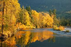 Herbstlaub reflektiert in Stillaguamish-Fluss in Washington State Lizenzfreie Stockbilder