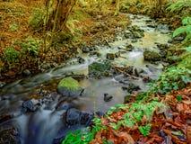 Herbstlaub reflektierte sich in einem kleinen Fluss mit moosbedeckten Steinen lizenzfreie stockfotografie