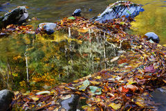 Herbstlaub, Reflexion Lizenzfreie Stockbilder