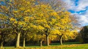 Herbstlaub an Roundhay-Park Stockbild