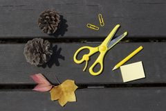 Herbstlaub, Scheren, Bleistift, Büroklammern auf einem hölzernen Hintergrund, Schulkonzept stockfoto