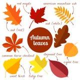 Herbstlaub stellte 2 ein Stockfoto