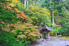 Herbstlaub an Taiyuin-Tempel, Nikko Japan Stockfotografie