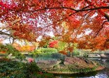 Herbstlaub in Texas stockfotografie