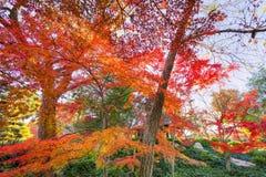 Herbstlaub in Texas stockfotos