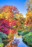 Herbstlaub in Texas Lizenzfreie Stockbilder