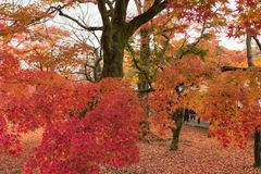 Herbstlaub in Tofukuji-Tempel, Kyoto, Japan stockfotografie