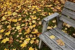 Herbstlaub und alte Holzbank Stockbild