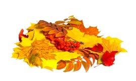 Herbstlaub und ashberry im Haufen Stockfoto