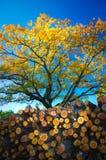 Herbstlaub und Baumstämme Lizenzfreies Stockbild