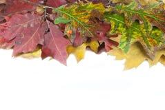 Herbstlaub und Eichel mit Platz Lizenzfreie Stockfotos