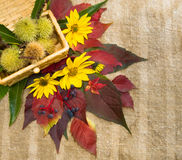 Herbstlaub und essbare Kastanien. Lizenzfreies Stockfoto