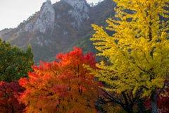 Herbstlaub und Gebirgshintergrund Stockfotos
