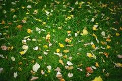 Herbstlaub und grünes Gras Stockfoto