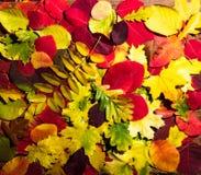 Herbstlaub und Kürbis über altem hölzernem Hintergrund stockfotografie