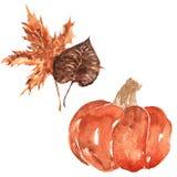 Herbstlaub und Kürbis Stockbilder