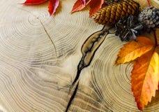 Herbstlaub und Kegel auf Holztisch stockbilder