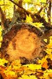 Herbstlaub und Klotz lizenzfreie stockfotos