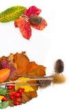 Herbstlaub und Papier für Anmerkungen. Lizenzfreie Stockbilder