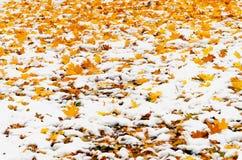 Herbstlaub und Schnee Lizenzfreie Stockbilder