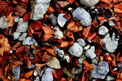 Herbstlaub und Steine Stockbilder