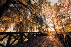 Herbstlaub und unscharfer Hintergrund Ruhiges herbstliches Naturkonzept, warme Töne Lizenzfreies Stockfoto
