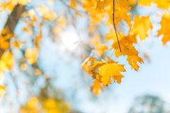Herbstlaub und unscharfer Hintergrund Ruhiges herbstliches Naturkonzept, warme Töne Lizenzfreie Stockfotografie