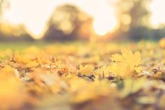 Herbstlaub und unscharfer Hintergrund Ruhiges herbstliches Naturkonzept, warme Töne Stockbild