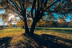 Herbstlaub und unscharfer Hintergrund Ruhiges herbstliches Naturkonzept, warme Töne Lizenzfreies Stockbild