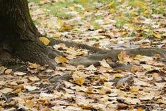 Herbstlaub unter einem Baum stockbilder