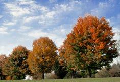 Herbstlaub unter gemaltem Himmel Stockbild