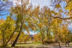 Herbstlaub in Utah Stockfoto