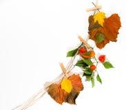 Herbstlaub von einem Seil mit Wäscheklammern Lizenzfreies Stockbild
