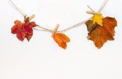 Herbstlaub von einem Seil mit Wäscheklammern Lizenzfreie Stockfotos