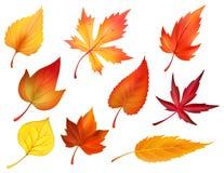 Herbstlaub von fallenden Blättern des Falles vector Ikonen