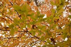 Herbstlaub von Farben Lizenzfreie Stockbilder