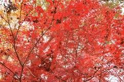 Herbstlaub von Farben Lizenzfreie Stockfotografie