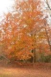 Herbstlaub von Farben Stockbilder